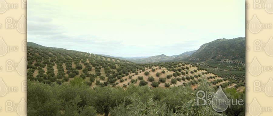 Comprar aceite de oliva virgen extra