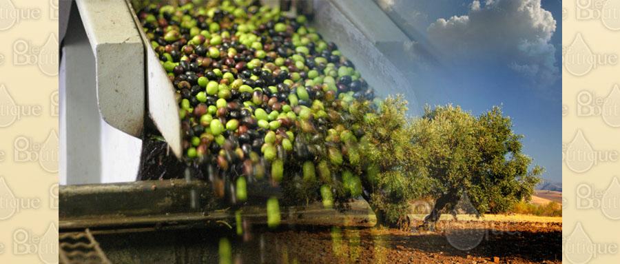 Principales ventajas del Aceite de Oliva Ecológico